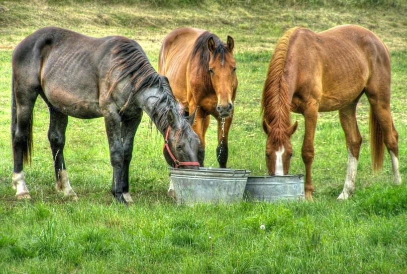 eating horses2_Piqsels