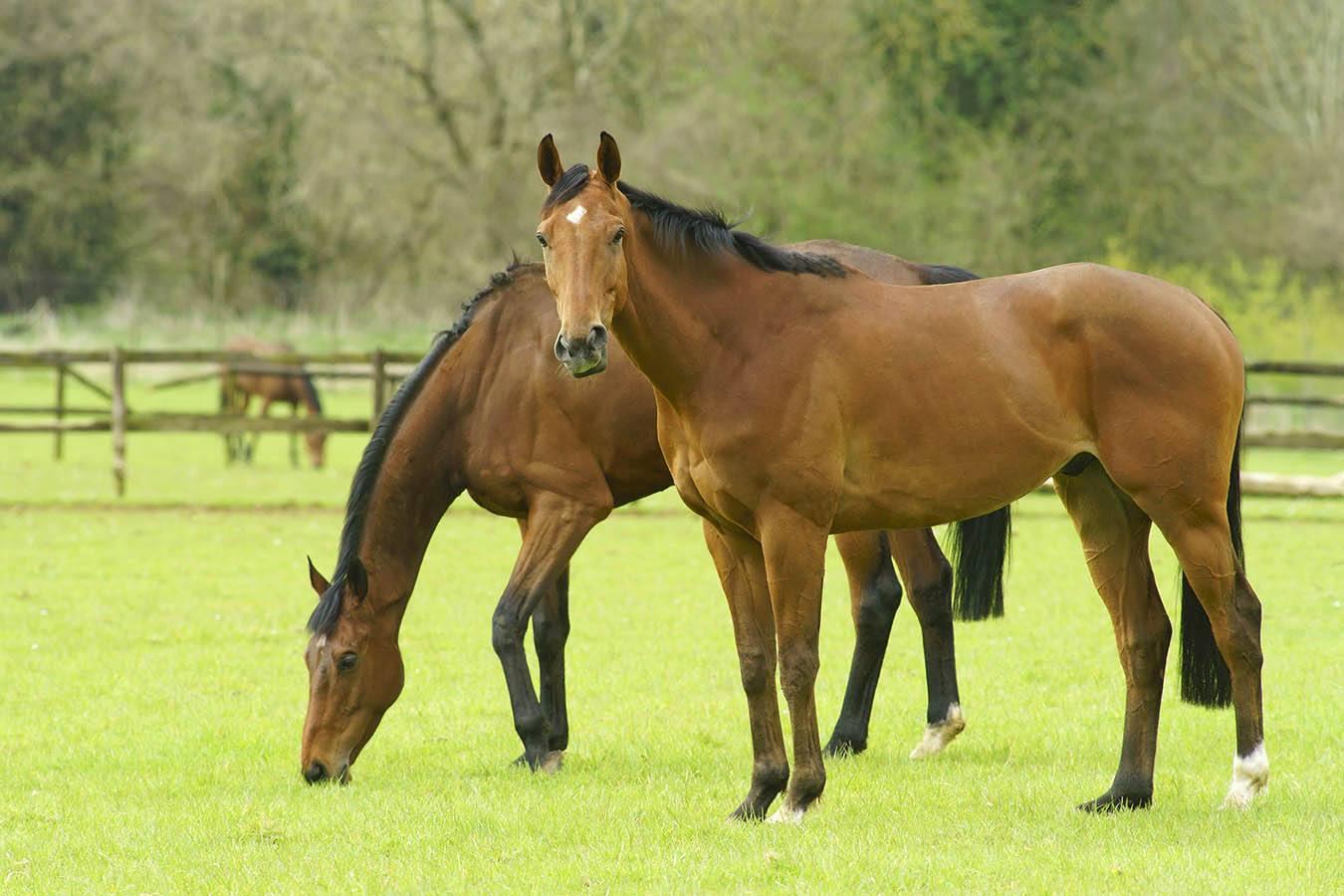 England Thoroughbred horses