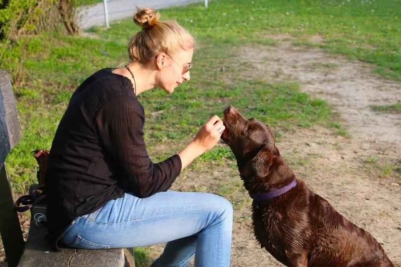 feeding dog_Hebi B._Pixabay