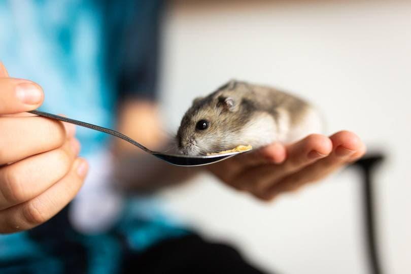 hamster 10_Cindy Parks_Pixabay
