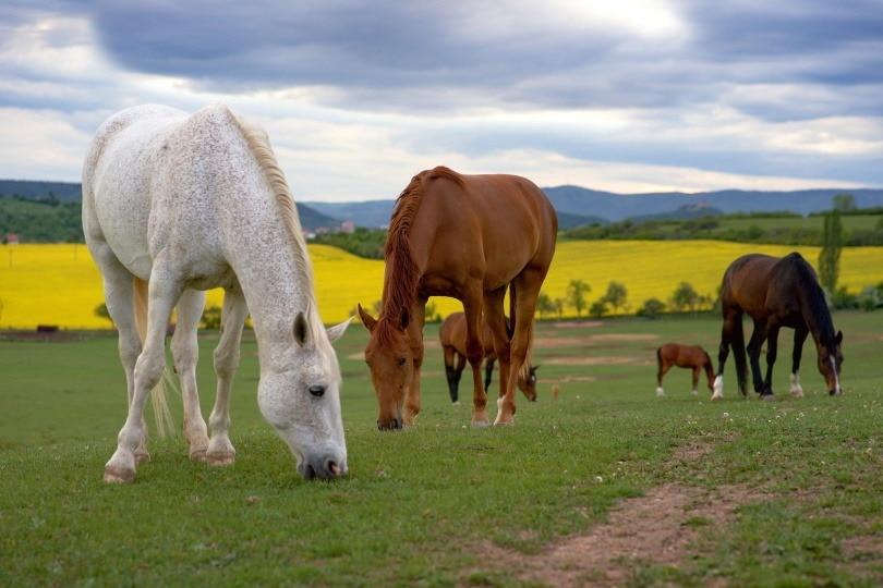 horse dom_Martina Janochová_Pixabay