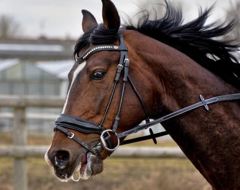 horse drooling_Christel SAGNIEZ_Pixabay