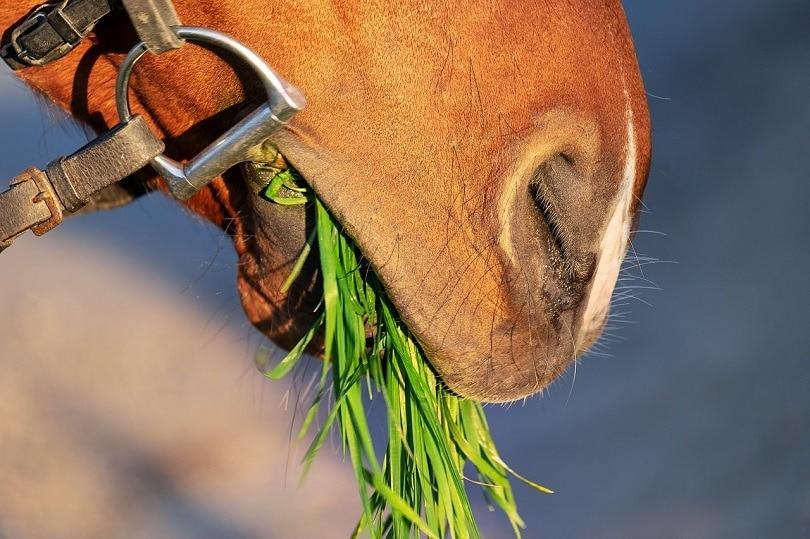 horse eating-pixabay