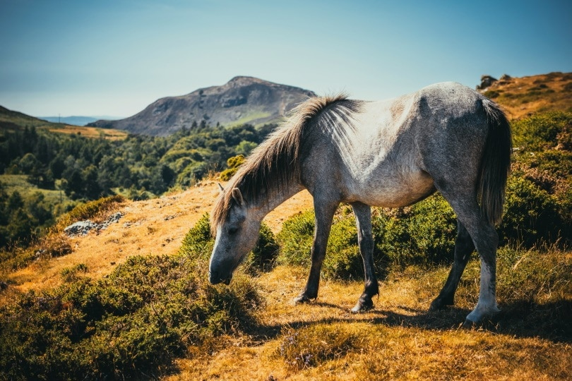 horse in mountain_Piqsels