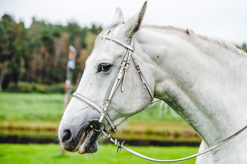 horse mouth_Piqsels