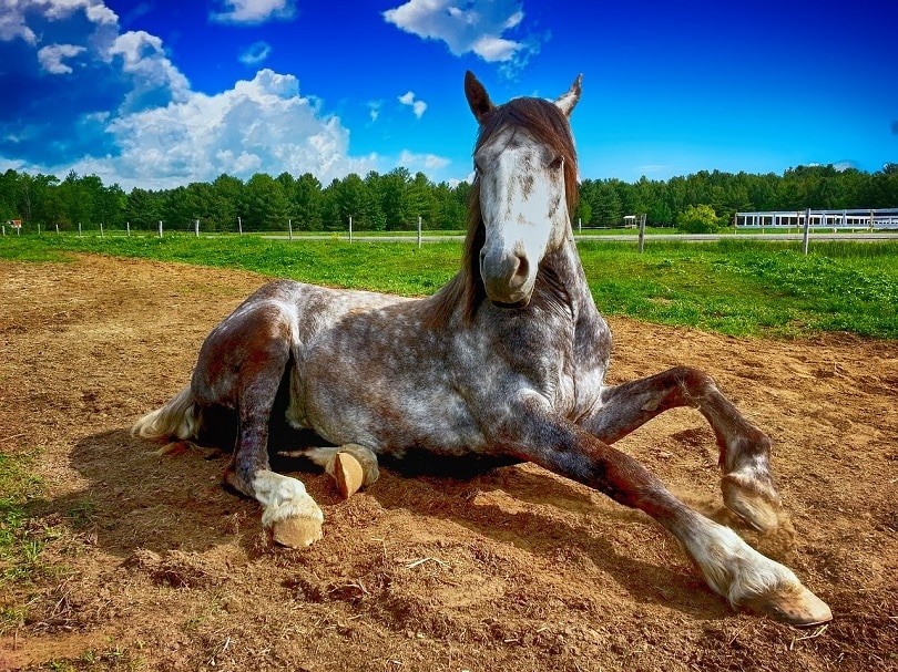 horses-lying-down_Pixabay