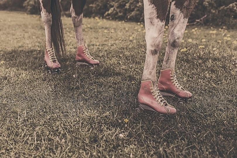 horseshoes-pixabay2