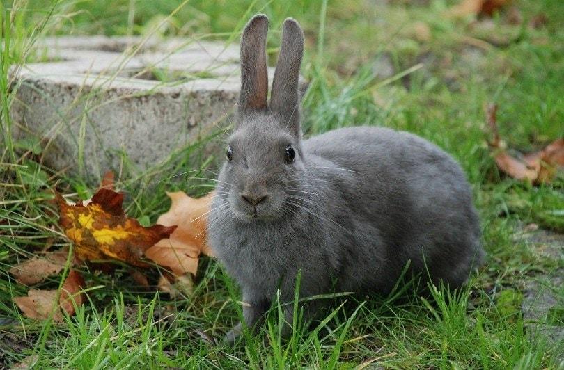 lilac rabbit outdoor