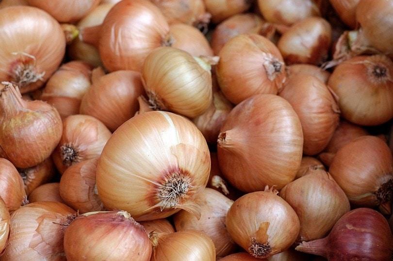 onions-pixabay