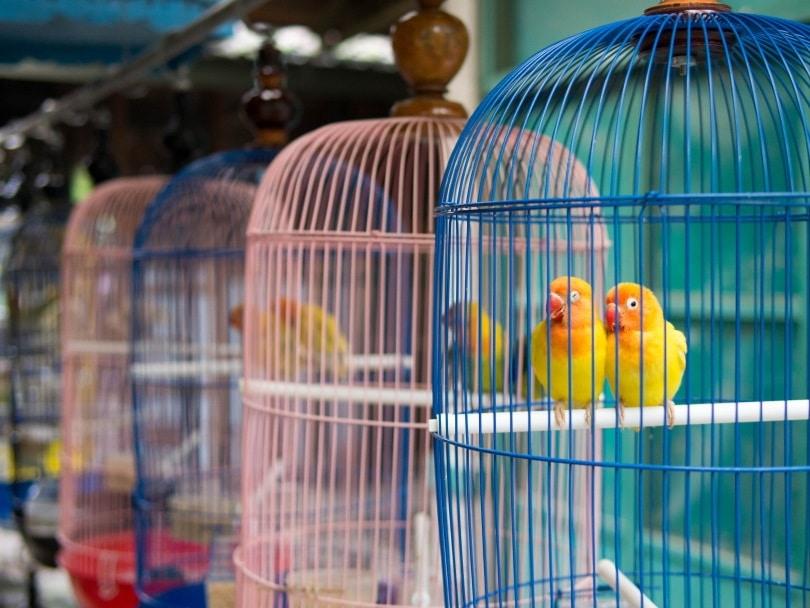 parakeet cage_R.M. Nunes_Shutterstock
