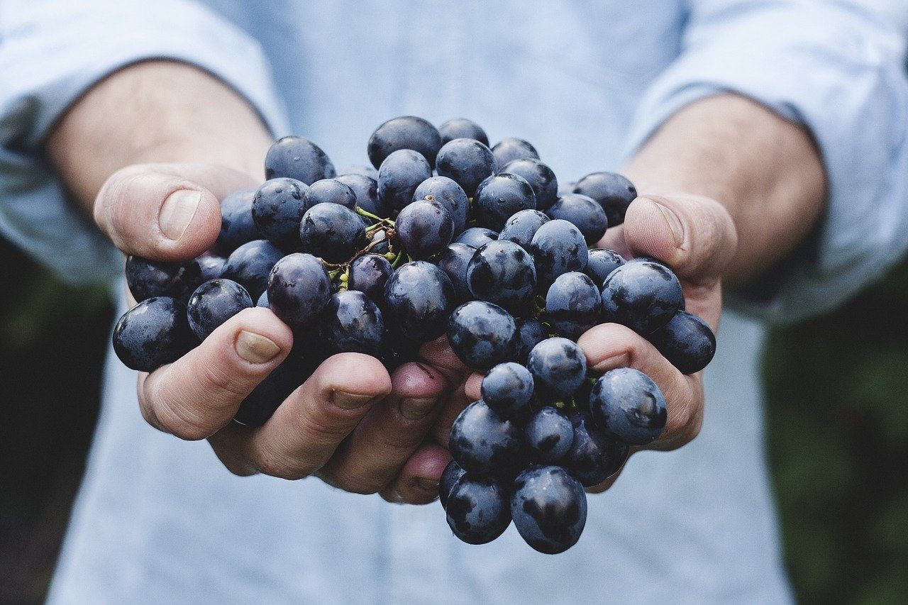 person carrying grapes
