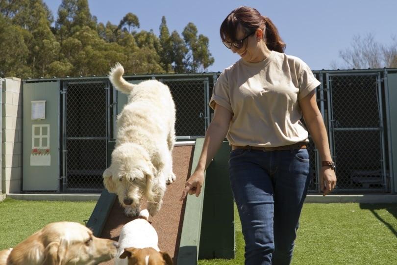pet boarding III_Jayme Burrows_Shutterstock