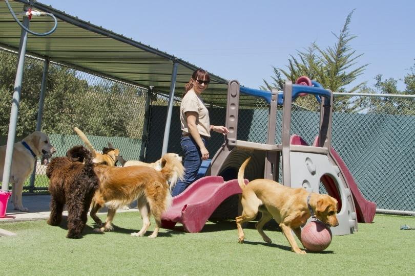 popular dogs_Jayme Burrows_Shutterstock