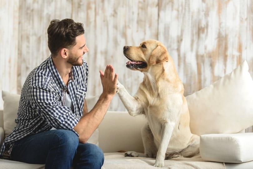 playing with dog_Olena Yakobchuk_Shutterstock