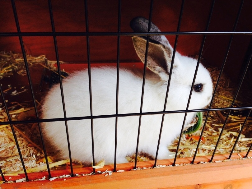 rabbit cage II_photosforyou_Pixabay