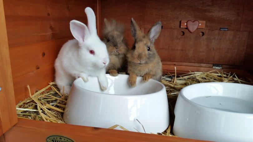 rabbit in cage III_Piqsels