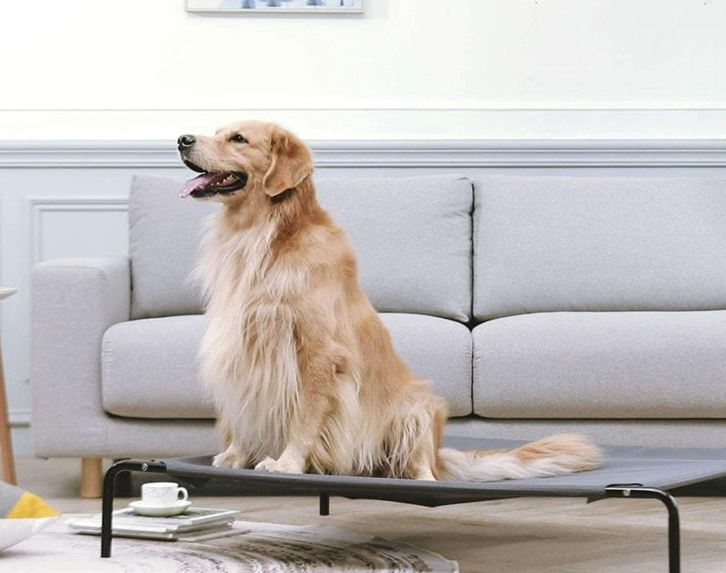 western home dog bed