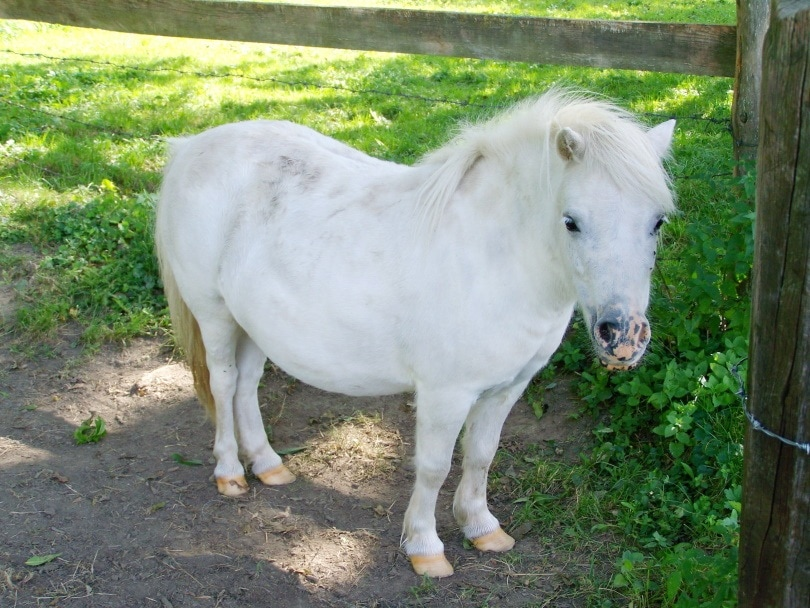 white horse_Piqsels