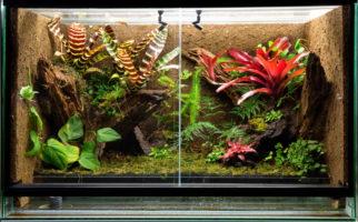 Crested Gecko Vivarium_Dirk Ercken_Shutterstock