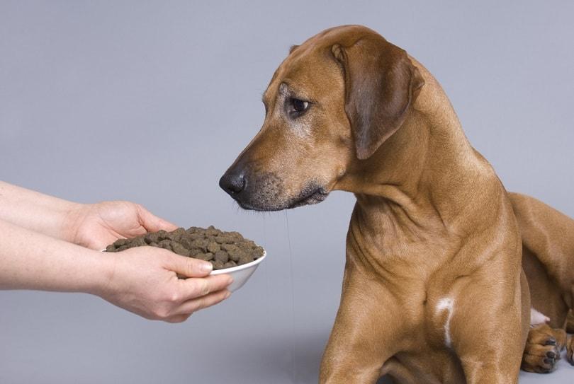 Dog-with-a-full-food-bowl_nancy-dressel_shutterstock
