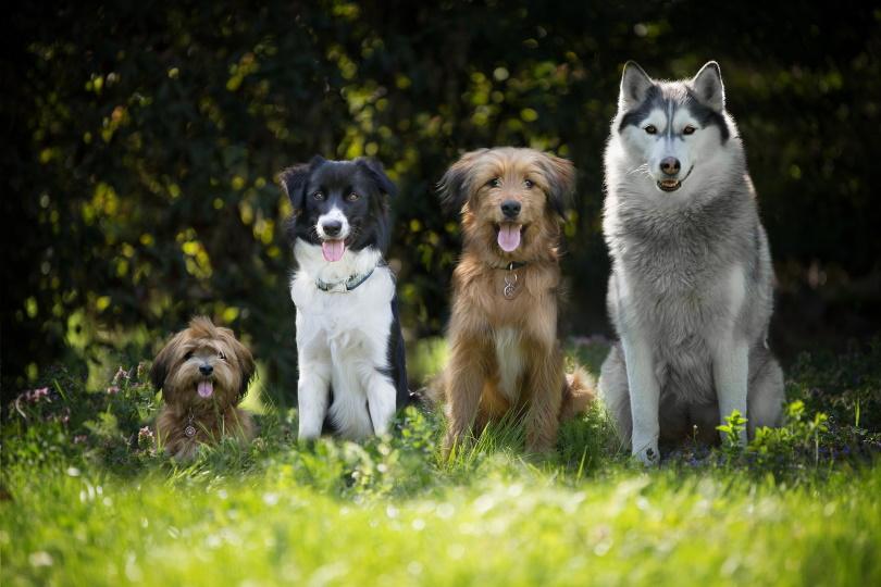 Dogs_Marta Reinartz_Pixabay