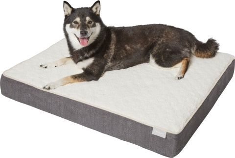 Frisco Orthopedic dog bed_Chewy