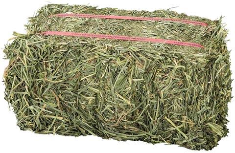 Grandpa's Best Orchard Grass Bale