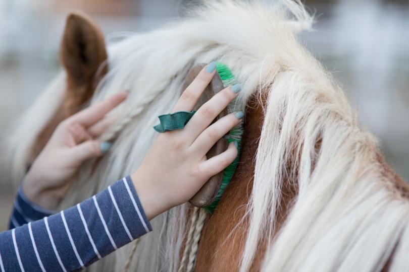 Horse grooming_Budimir Jevtic_Shutterstock