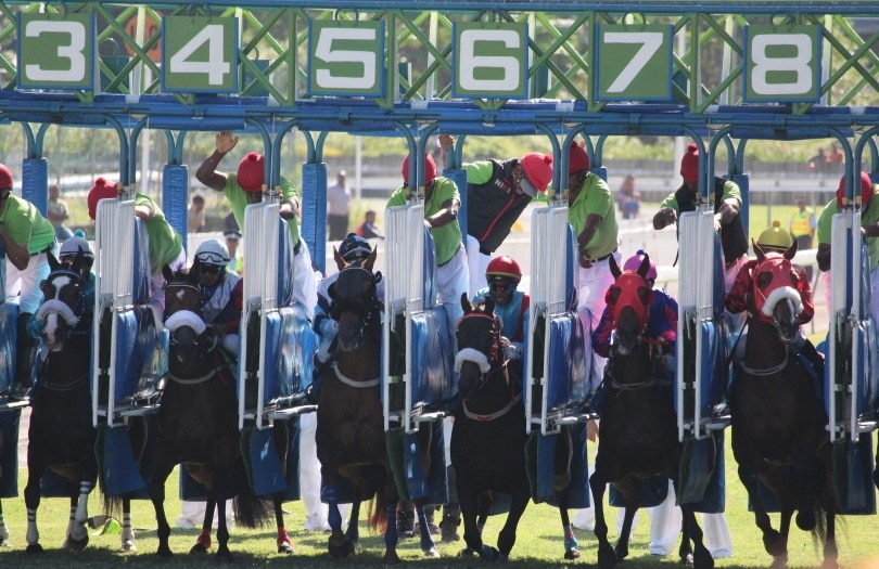 Maiden Horse Race_Piqsels