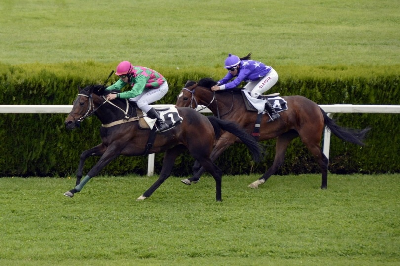 Maiden Special horse race_Piqsels