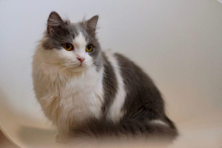 Napoleon cat_Shutterstock_Robert Way
