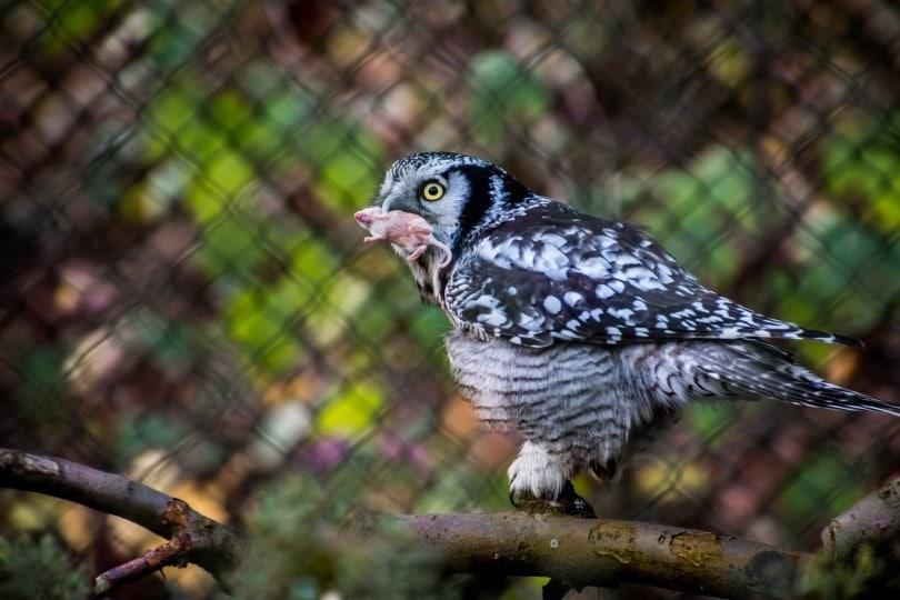 Owl_TeeFarm_Pixabay