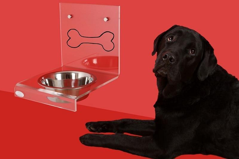 Raised dog bowl and black lab