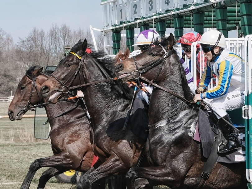 Stakes Horse Race_Piqsels