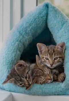 Tent Cat Bed