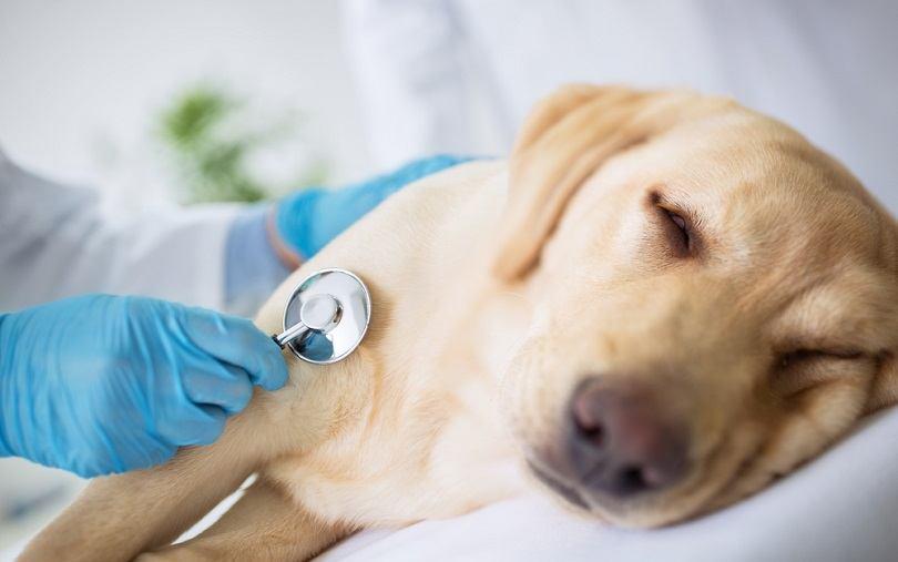 dog check by vet_didesign021, Shutterstock