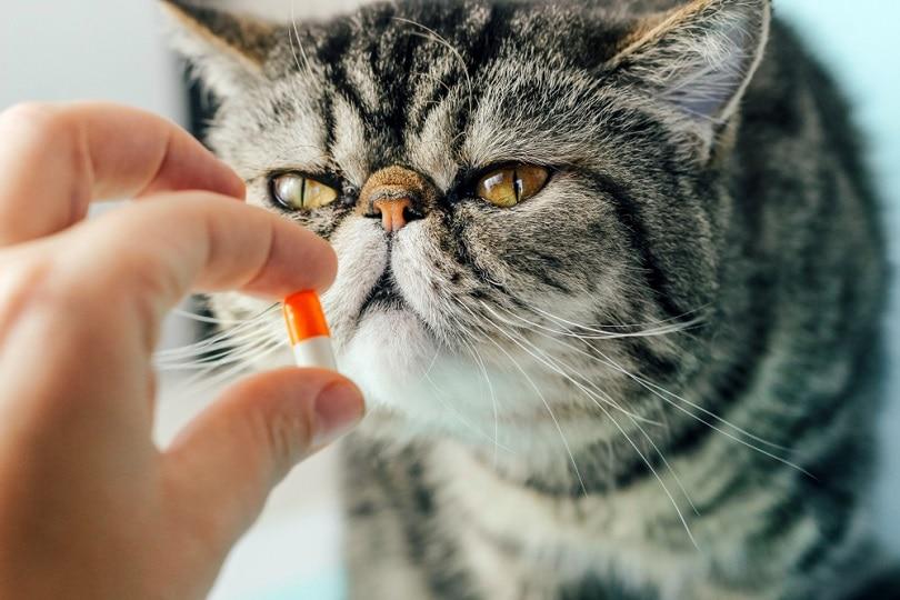 Veterinarian-gives-a-pill-to-a-cat_Piskova-Photo_shutterstock