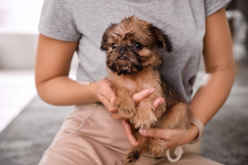 Woman holding adorable Brussels Griffon puppy indoors