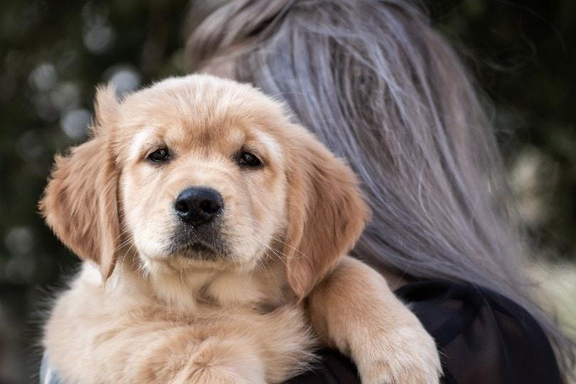 a woman hugging a golden retriever puppy
