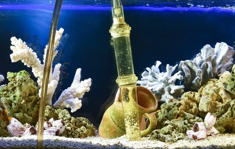 aquarium filter_Andrey_Nikitin_Shutterstock