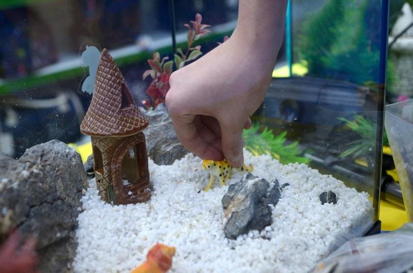aquarium set up_Krysja_Shutterstock