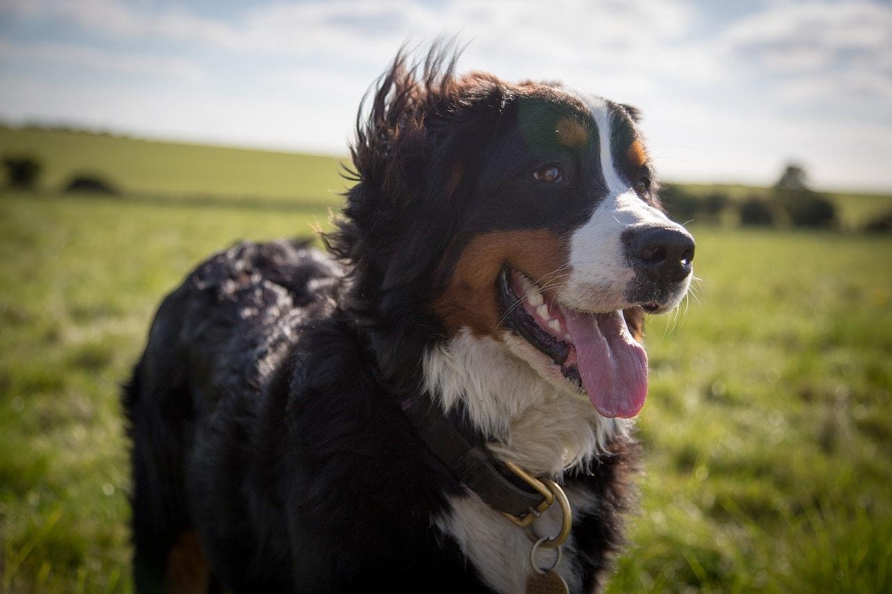 dog outdoor_Pixabay