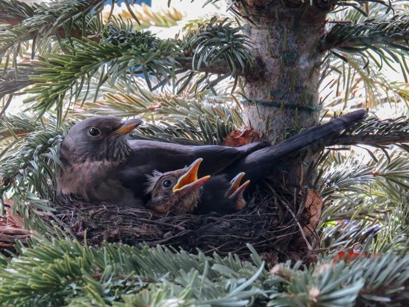 birds nest_Gerhard G._Pixabay
