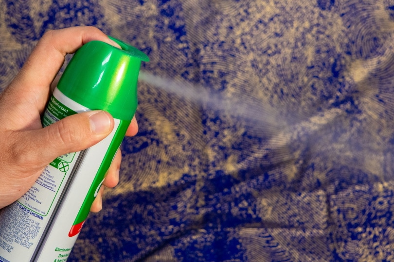 chemical spray_Squirrel_photos_Pixabay