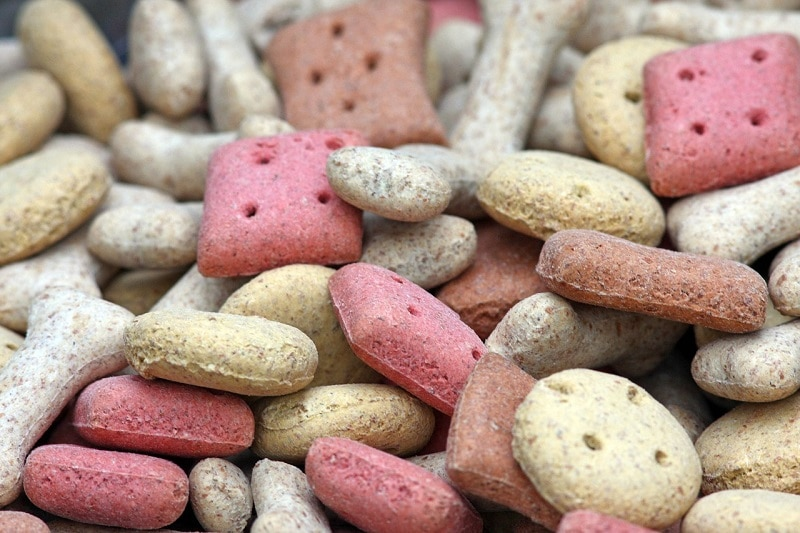 close up of dog food