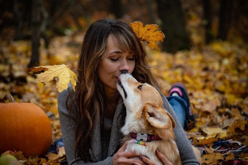 corgi kissing a woman