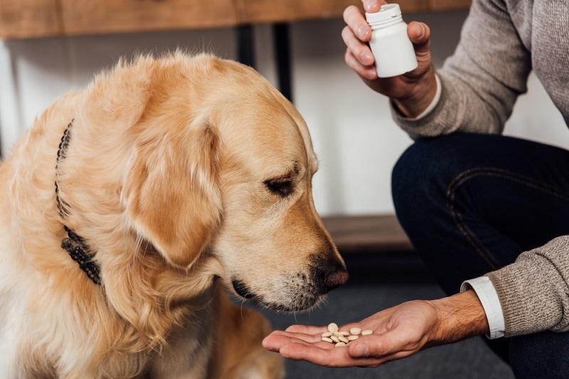 dog medicine_Shutterstock_LightField Studios
