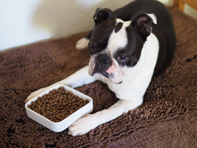 dog food_Jaja Fekiacova_Shutterstock
