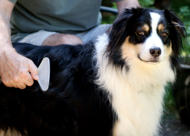 dog hair brushing_Jennie Book_Shutterstock