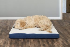 dog in FurHaven Faux Sheepskin & Suede Deluxe Orthopedic Cat & Dog Bed w:Removable Cover